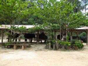 słoń, tajlandia, kambodża, sri lanka, elephant (19)