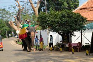 słoń, tajlandia, kambodża, sri lanka, elephant (2)